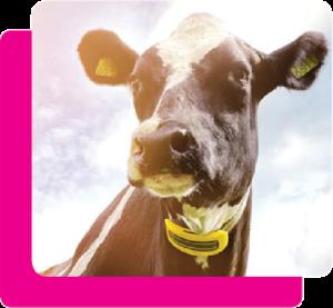 IDS voor Nedap livestock management